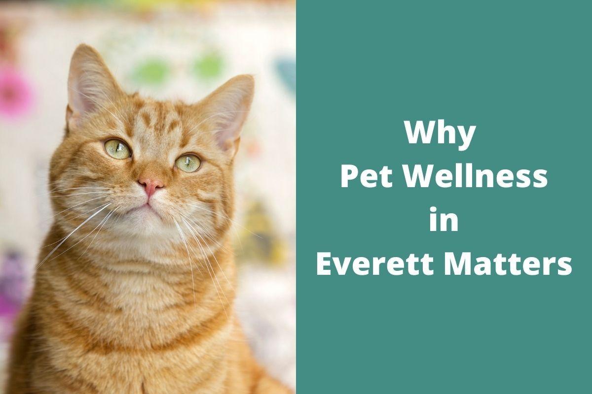 Why-Pet-Wellness-in-Everett-Matters